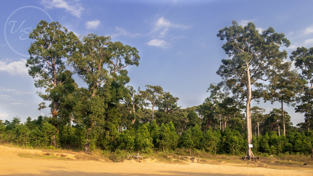 Natural Forest patch