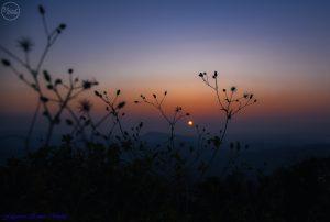 Landscape 12